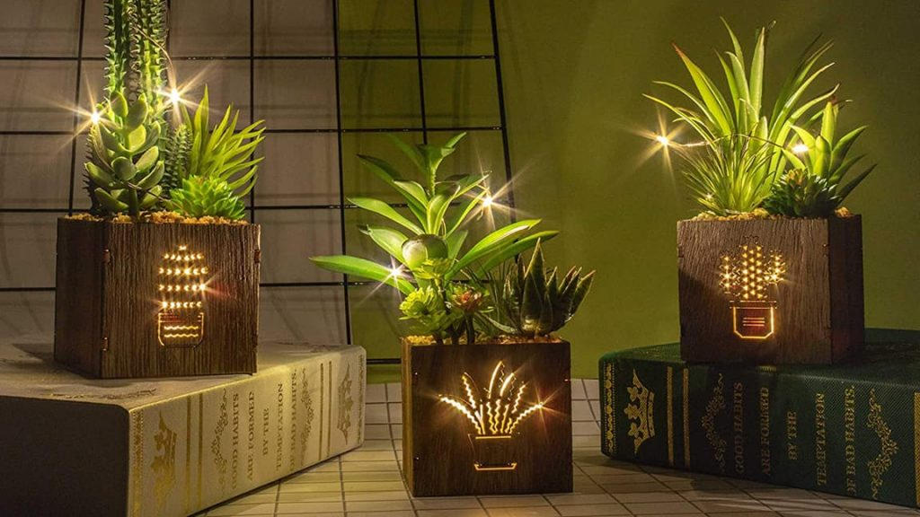 10 Best Christmas Plants Reviews for 2020